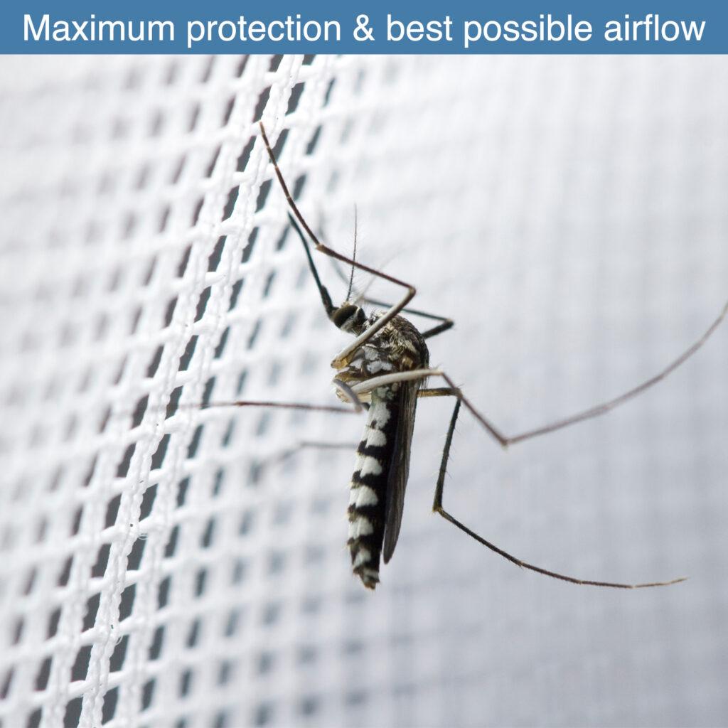 9. Mosquito on netting